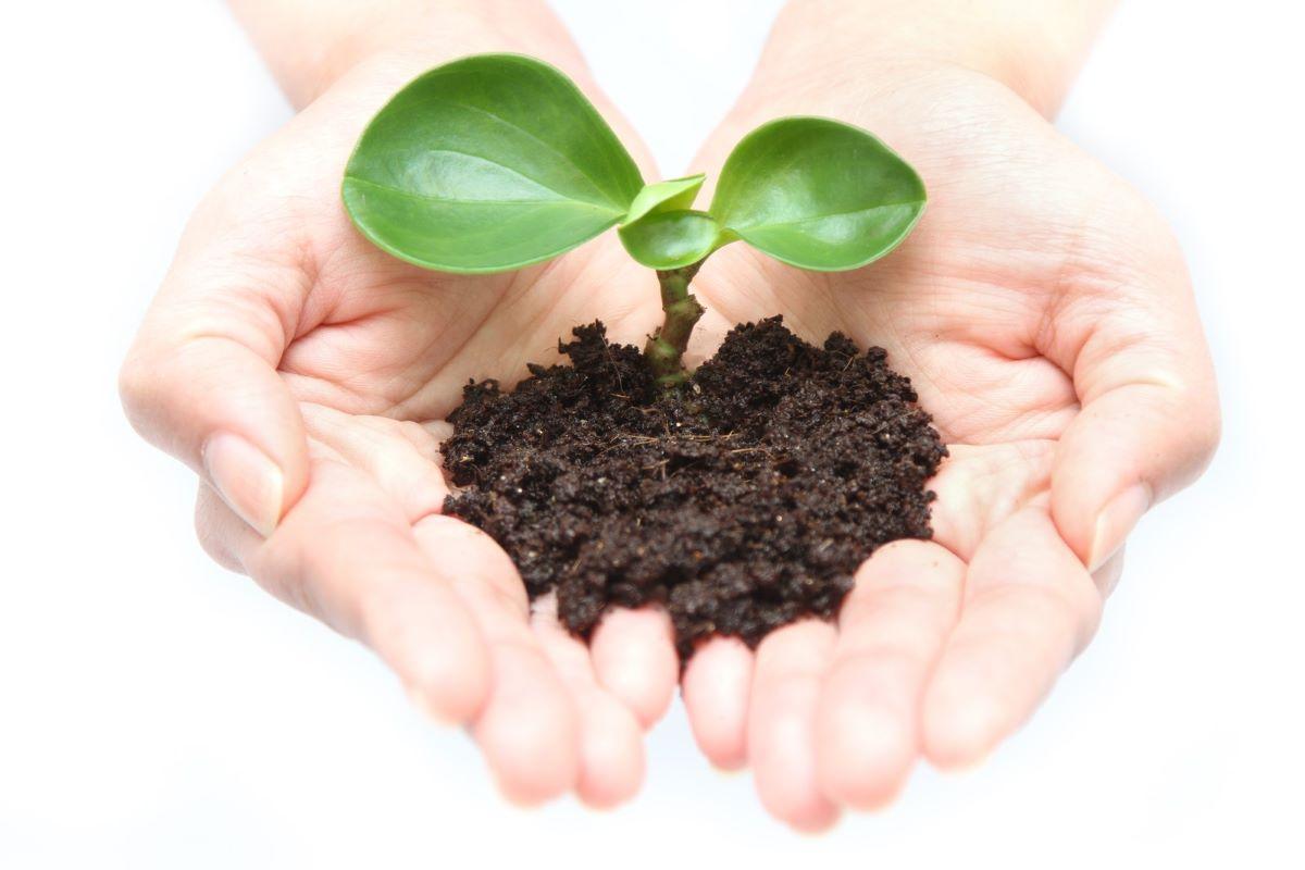 芽が出た植物を両手で持つ