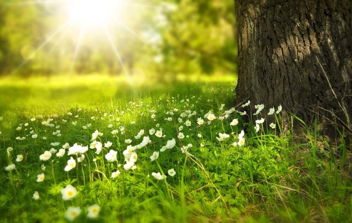 森の木の下に咲く白い花