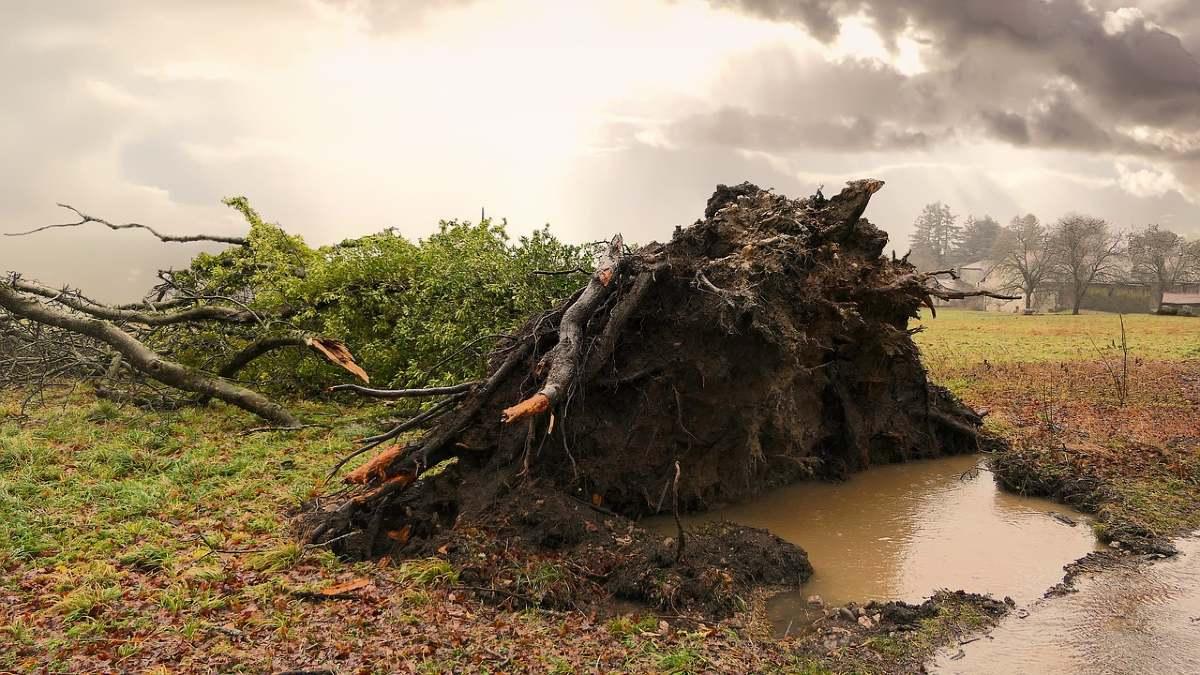 嵐によって倒れる木
