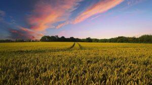 畑と夕焼け