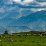 SDGsの目標15「陸の豊かさを守ろう」により自然と生態系を守る
