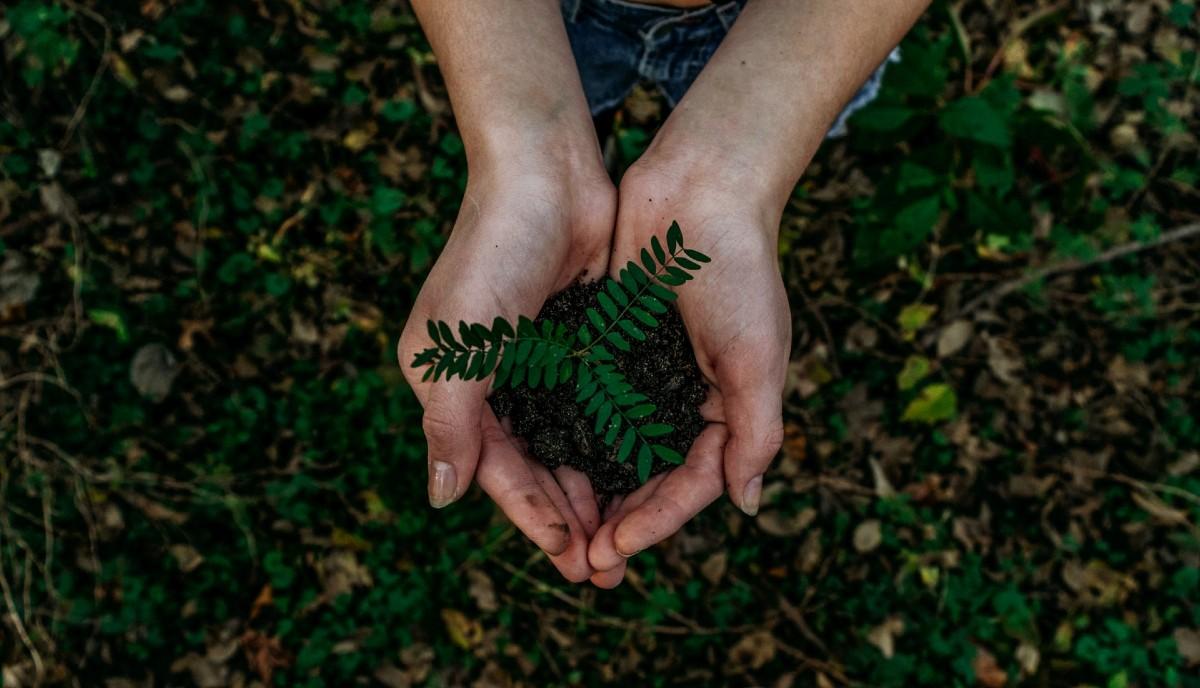 芽生えた植物を両手で持つ